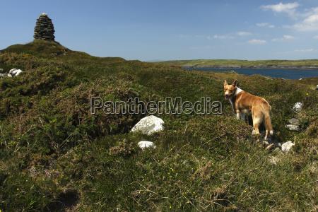 dog on long island on the