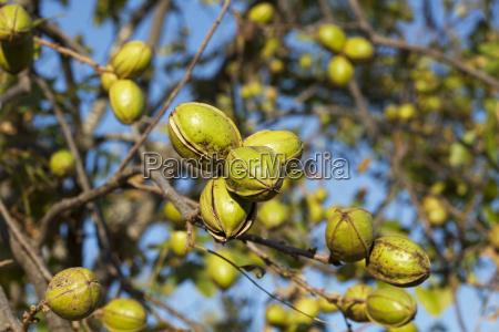 landwirtschaftlich detail baum gruen gruenes gruener
