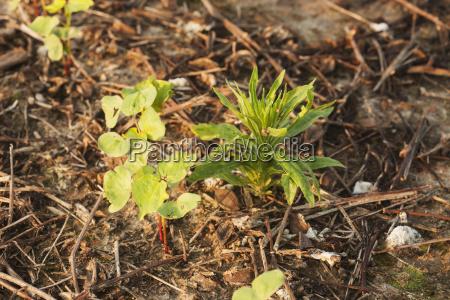 blatt baumblatt landwirtschaftlich boden erdboden erde