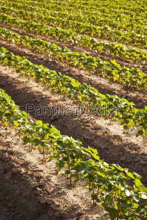 bestellen ordern landwirtschaftlich detail boden erdboden
