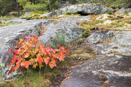 blatt baumblatt fahrt reisen farbe park
