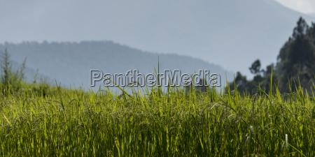 punakha valley thimphu bhutan