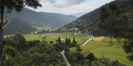 road winding through a lush valley