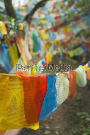 beautiful tibetan flags in the forest