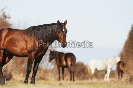 wild andalusian horse at a low