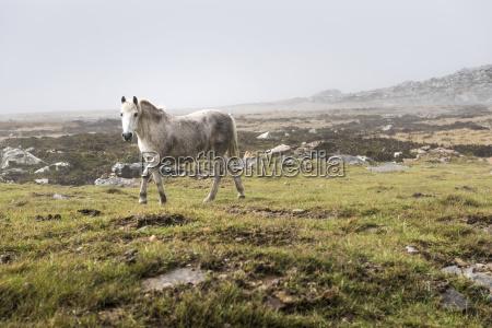 a wild white horse walking across