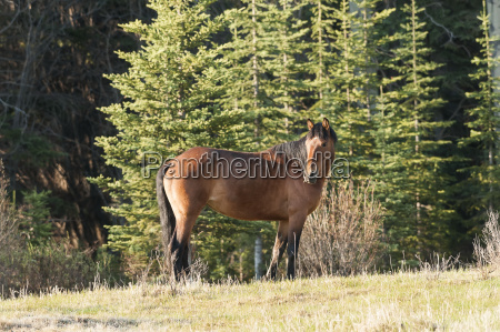 wild horse in a forest sundre