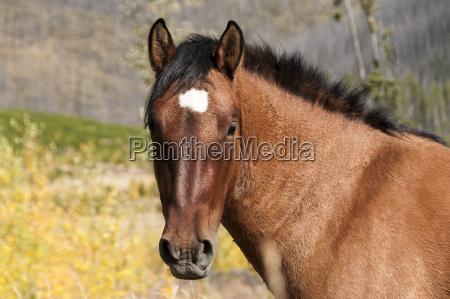 portrait of a wild horse alberta