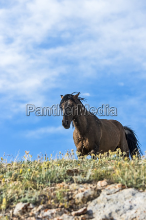 wild horse standing and looking over