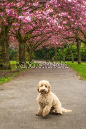 a dog sits on a trail