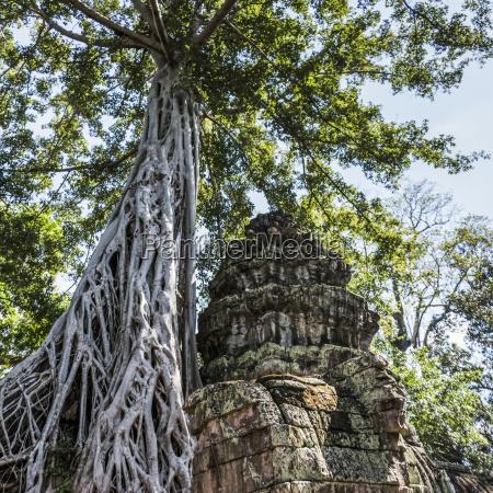 ta prohm kel temple angkor archeological