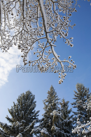 low angle view of frosted and
