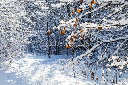 blatt baumblatt baum park winter holz
