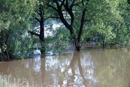 UEberflutete baumlandschaft mit braunem wasser auf