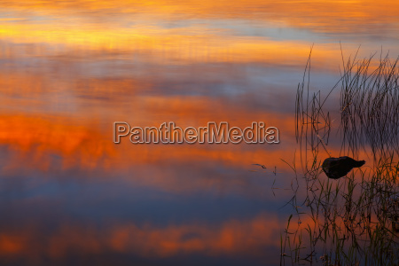 stone and lake reeds in sunset