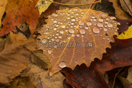 water droplets on a brown aspen