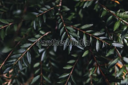 dark green leaves on the branch