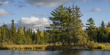 coniferous trees and golden deciduous trees