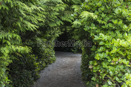 a trail leading through trees and