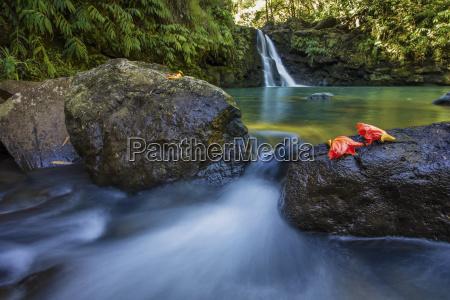 a lush roadside waterfall on the