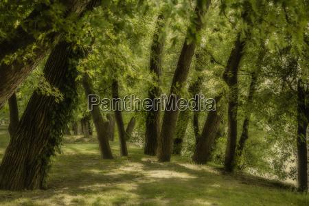 baum baeume park blaetter sommer sommerlich