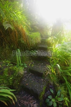 stairway through lush plants