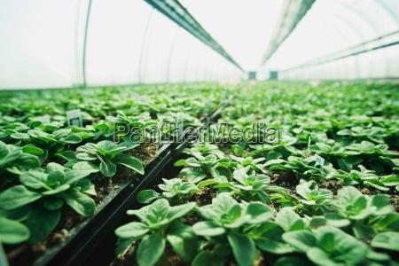 plants growing in a plant nursery