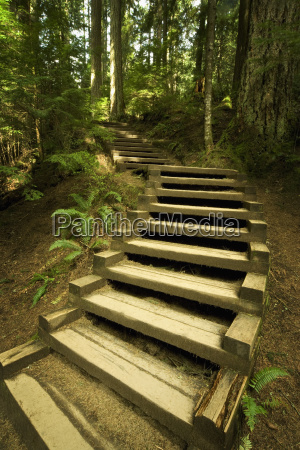 stairs in forest