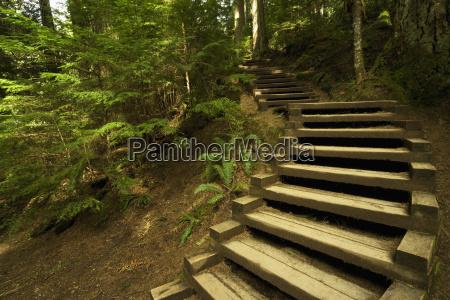 stairway in rain forest