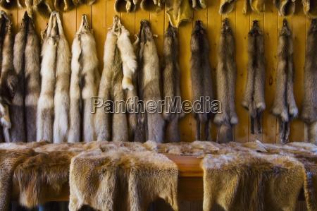 animal pelts