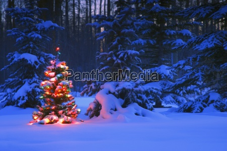 illuminated christmas tree in the forest