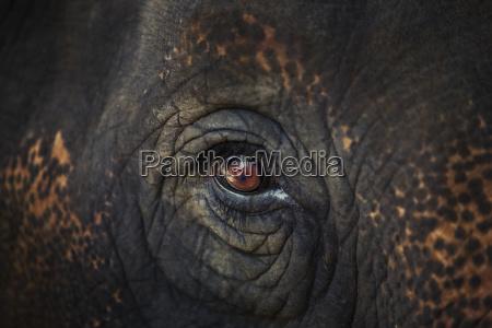closeup of an animals eye