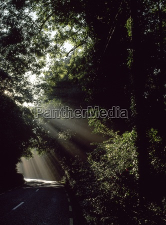 sunburst in the woods kenmare ireland