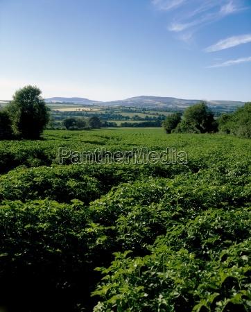 essen nahrungsmittel lebensmittel nahrung landwirtschaftlich landwirtschaft