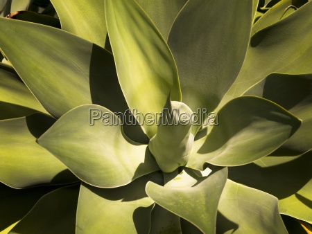 closeup of a plant in the