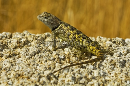farbe tier reptil wild eidechse tiere