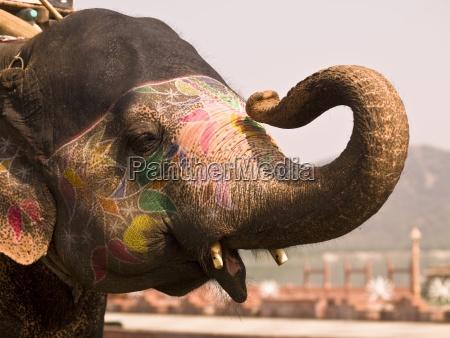 elephant jaipur india