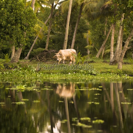 animal reflection kerala india