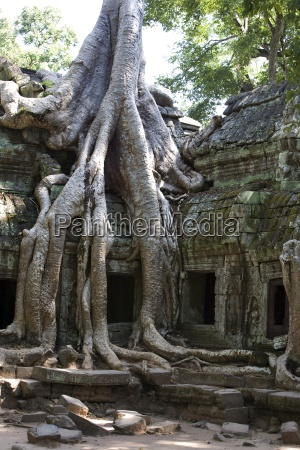 tree roots covering temple ruins in