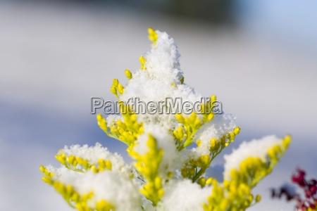 fresh snow on plants