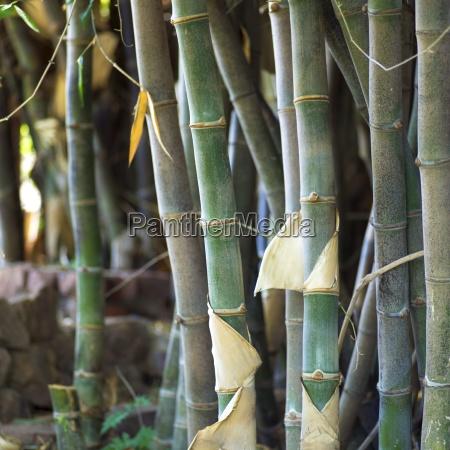 plant stalks