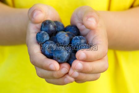 blaubeeren heidelbeeren fruechte beeren blaubeere heidelbeere