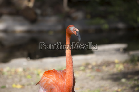 umwelt tier vogel wildlife biologie zoologie