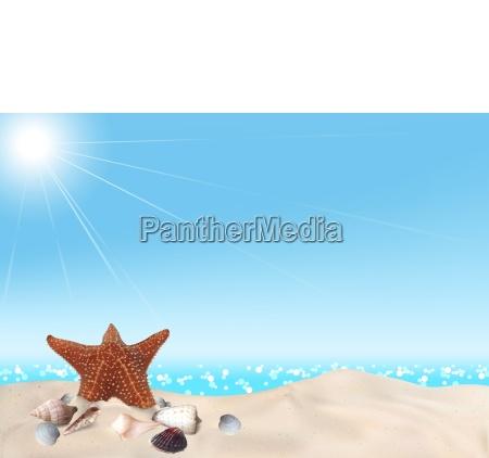 seashells on seashore background