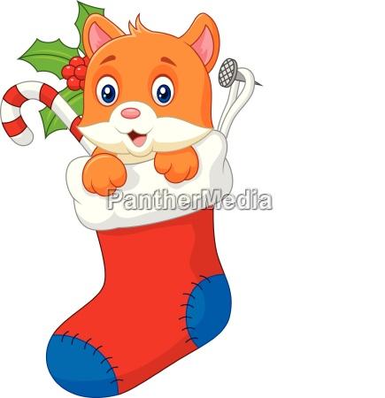 cartoon animal cat in the sock