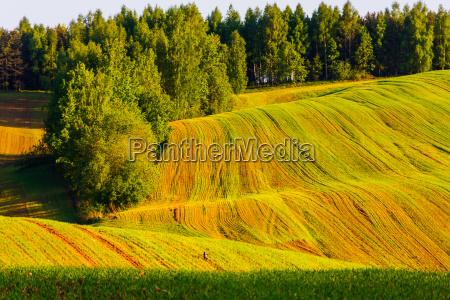 landwirtschaft ackerbau feld sonnenlicht springen springend