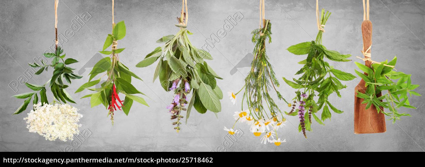 frische, pflanzen, für, tee - 25718462