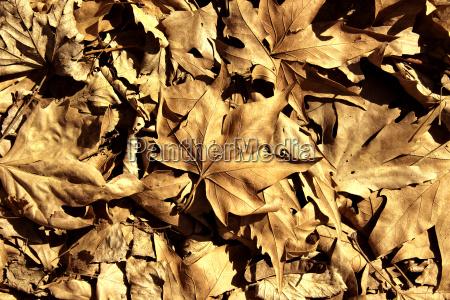 blatt baumblatt baum blaetter saison jahreszeit