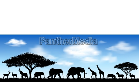 african animals savanna