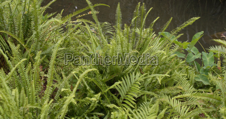green fern plant